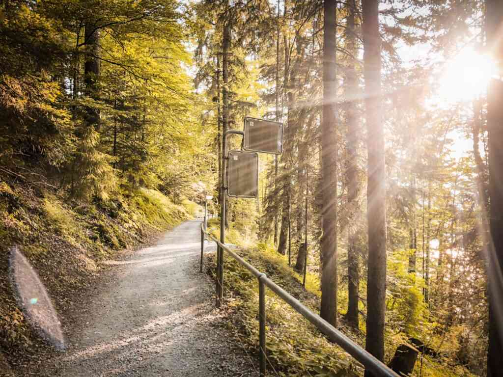 Rigi Panoramic Trail is one of the best things to do  Zurich with kids