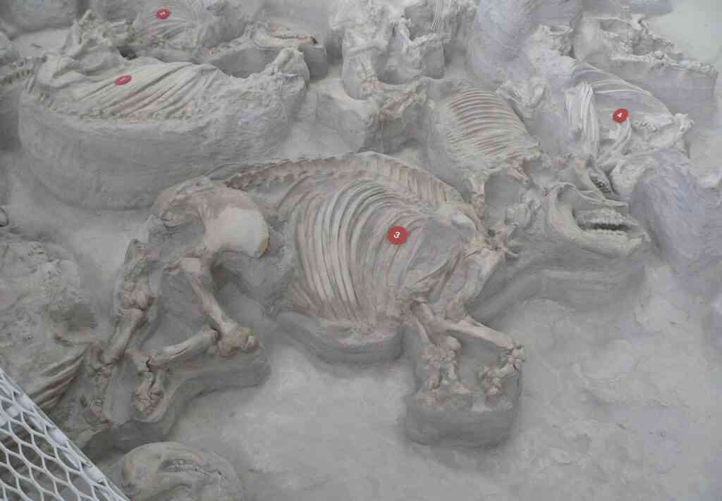 The Ashfall Fossil Beds museum is one of the best places to visit during COVID