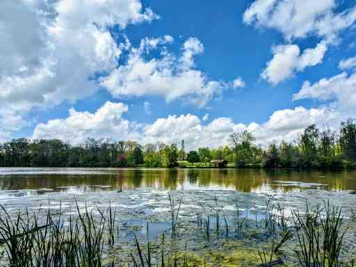 Houston Arboretum and Nature center - Things to Do in Houston with Kids