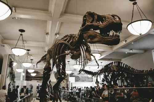 NY American museum of natural history - Things To Do in New York With Kids