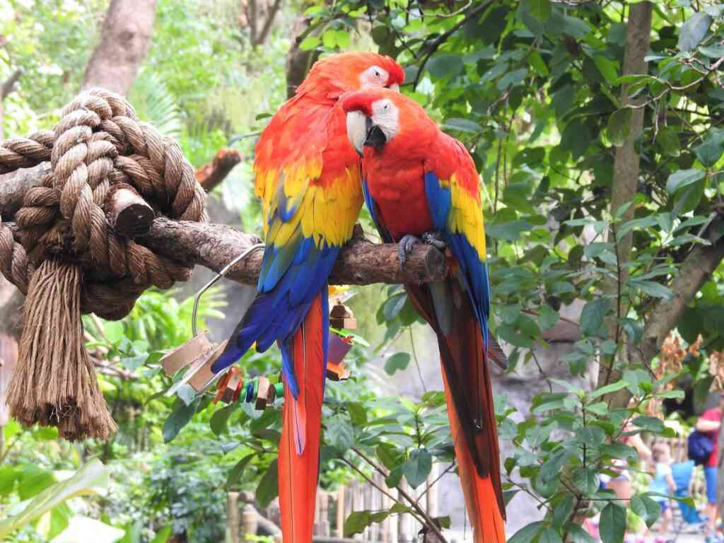 Macaw Mountain Bird Park and Nature Reserve